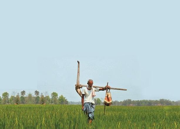 印度农业部签署5份备忘录 促进农业领域的数字技术