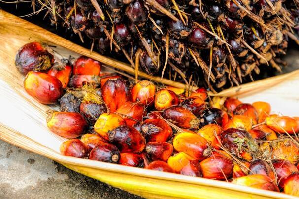 马来西亚交易所衍生品的毛棕榈油期货合约周一收高